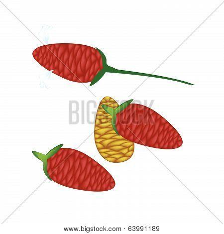 Fresh Zingiber Zerumbet Corn On White Background