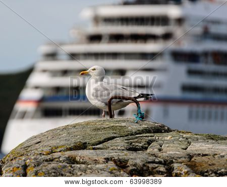 Seagull On Background Of Large Ship