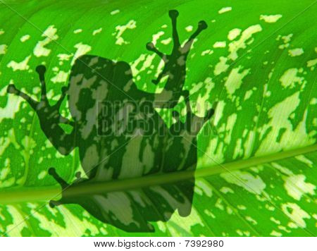 The Shadow Of Frog