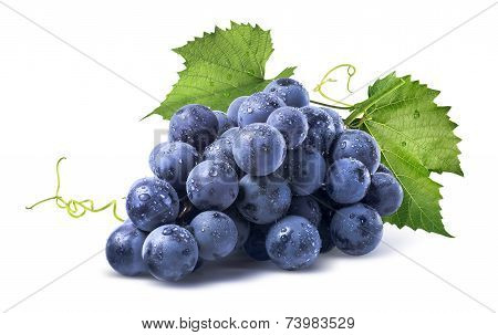 Blue wet Isabella grapes bunch isolated on white background as package design element poster