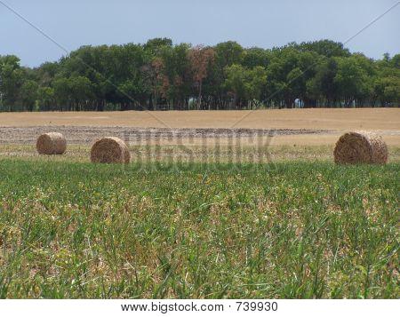 Texas hay bales