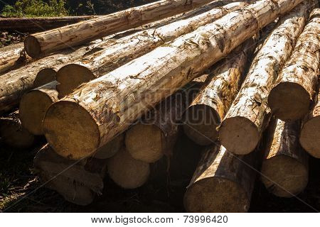Few Logs Pattern In Sunlight