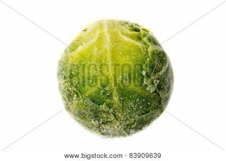 Single Frozen Sprout