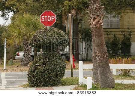 Someone trimmed their bush surround the stop sign to look like a body on Tybee Island, Georgia. poster