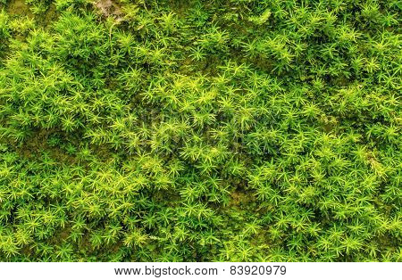 Stone Overgrown With Green Moss In Forest