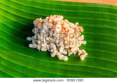 Red Ant Eggs
