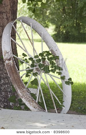 Antique Tractor Wheel And Vine