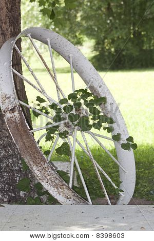 Antique Tractor Wheel, Vine And Tree