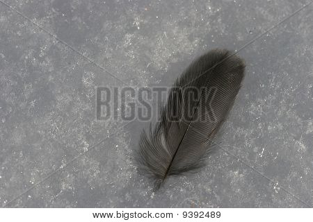Feather in snow