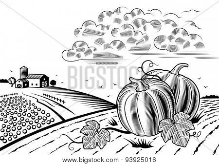Pumpkin harvest landscape black and white. Editable vector illustration with clipping mask.