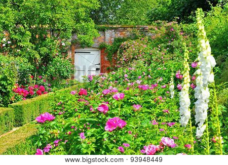 Old English Rose Garden