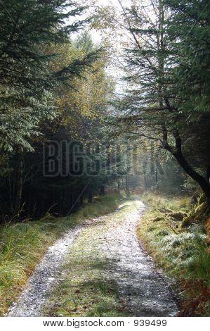 Autumn Trail After A Rain