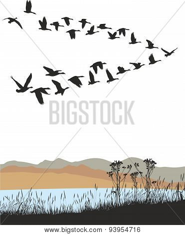 Migrating wild geese over autumn landscape