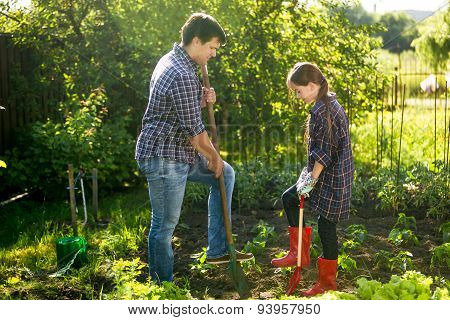 Father And Daughter Spudding Garden Bed With Shovels
