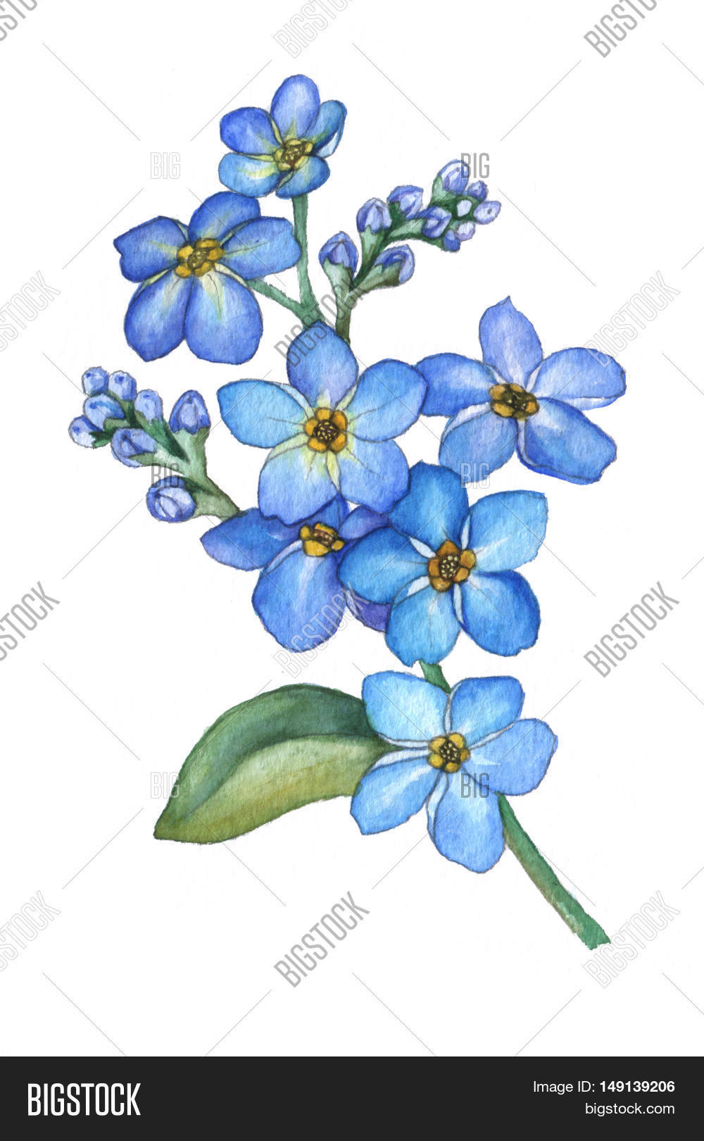 Forget Me Not Flowers Image Photo Free Trial Bigstock