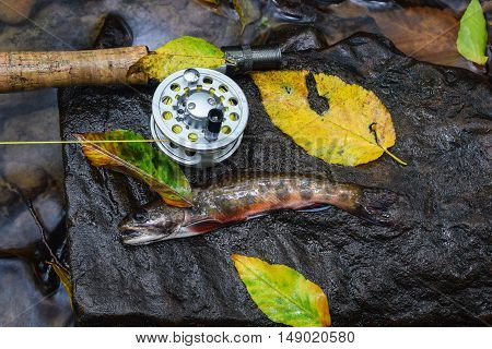 Fall fly fishing for Brook Trout in the Appalachians.