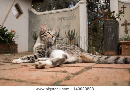 Portrait of a cat lying down in a courtyard as it turns it's head to look over it's shoulder.