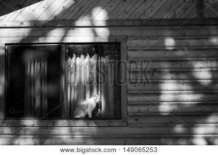 A black and white image of a cat peering out the window of a rustic log cabin.