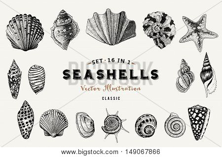 Seashells, coral and starfish. Set. Vector illustration in sea style.