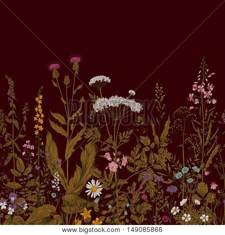 Vector seamless floral border. Herbs and wild flowers. Botanical Illustration engraving style. Vinous