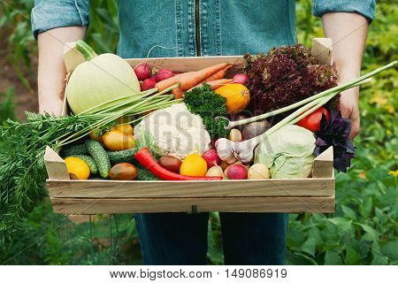 Farmer holding a basket full of harvest organic vegetables and root in the garden. Autumn holiday Thanksgiving.