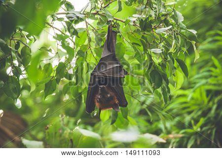 Bat Hanging Upside Down In A Green Rainforest
