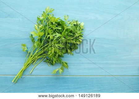 Parsley branch on a blue wooden background