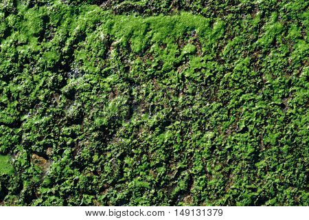 Green swamp surface macro natural texture photo