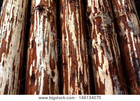 wooden logs for construction of a house with hand-hewn crust. The concept of the use of natural materials.
