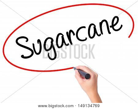 Women Hand Writing Sugarcane  With Black Marker On Visual Screen.