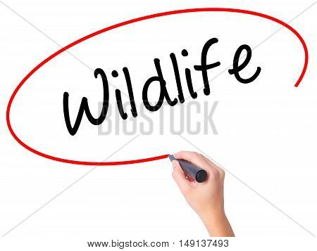 Women Hand Writing Wildlife  With Black Marker On Visual Screen