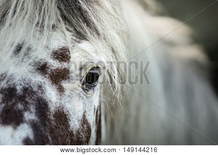 White Spotted Horse Portrait