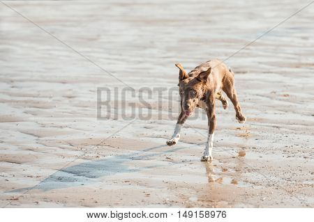 crazy playful dog on a beach chasing its own shadow