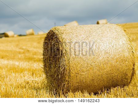 Closeup of straw bale after harvest to obtain wheat.