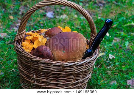 basket with ceps and chanterelles and knife