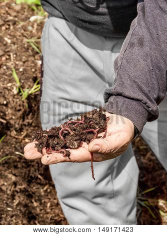Person showing handful of compost with earthworms