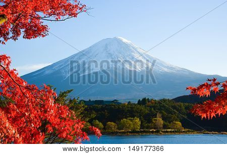 Mt. Fuji in autumn at Kawaguchiko lake. red maple and fuji san in Japan. mount Fuji at lake Japan.  Fuji san Lanscape in Japan . fuji in Yamanashi.