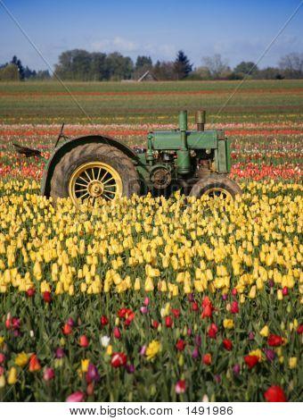 Tulip Farm Tractor