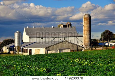 Lancaster County Pennsylvania - October 17 2015: A pristine Amish farm with large barn silos and fields of produce  *