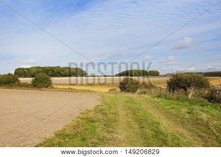 Bridleway In Late Summer