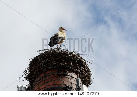 Stork standing in his nest on brick chimney and lookout