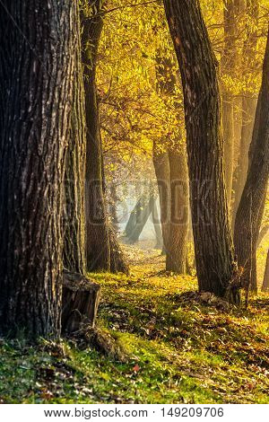 Forest In Foliage On Sunny Autumn Day