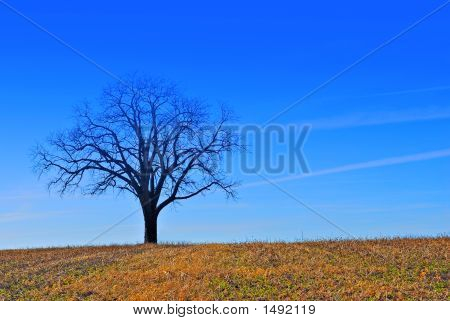A Tree And A Farm Field