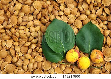 Apricot pits dried. The background of apricot pits.