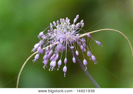 Extreme Close-up Shot Of Beautifull Wild Flower