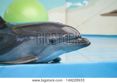 Cute young smiling dolphin in the dolphinarium