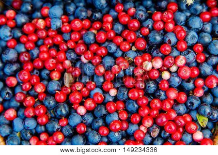 Healthy and delicious organic blueberries and cowberrys background.