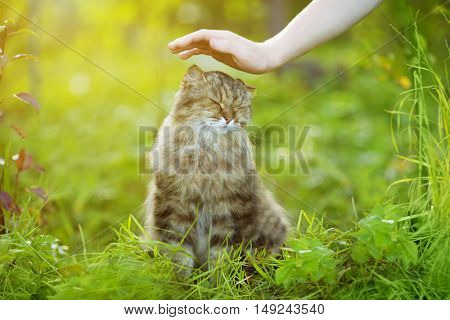 Cat and hand on nature background. Allergies to animals, cat fur. Caring for Pets and stray animals