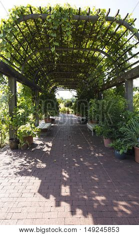 Empty benches in garden tunnel and shaped pergola