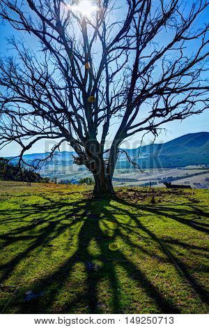 Single tree casts a shadow on a grassy hillside